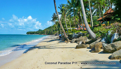 Our tranquil, idyllic beach at Coconut Paradise Resort.