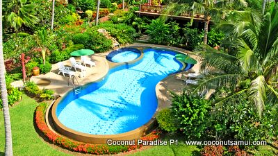 Coconut Paradise swimming pool.