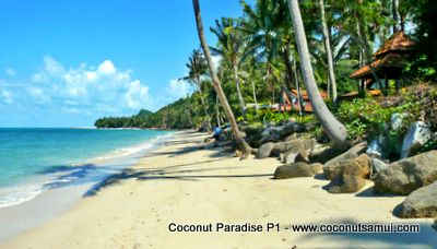 Tranquil and serene beach at Coconut Paradise.